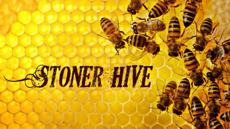 BeesonHoneycomb3.jpg